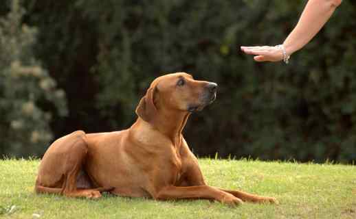 stay, teaching dog to stay