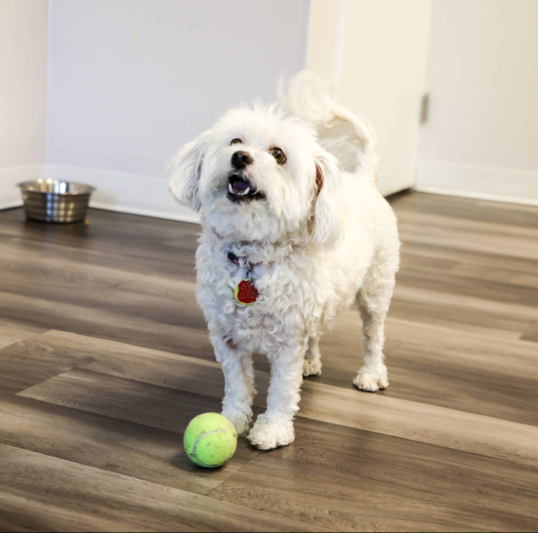 Dog trainer Bonita Springs