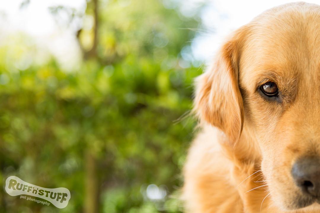 Kenny | Ruff 'n' Stuff Pet Photography | Helen Trenerry