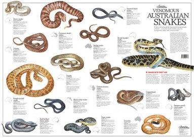 snake_poster