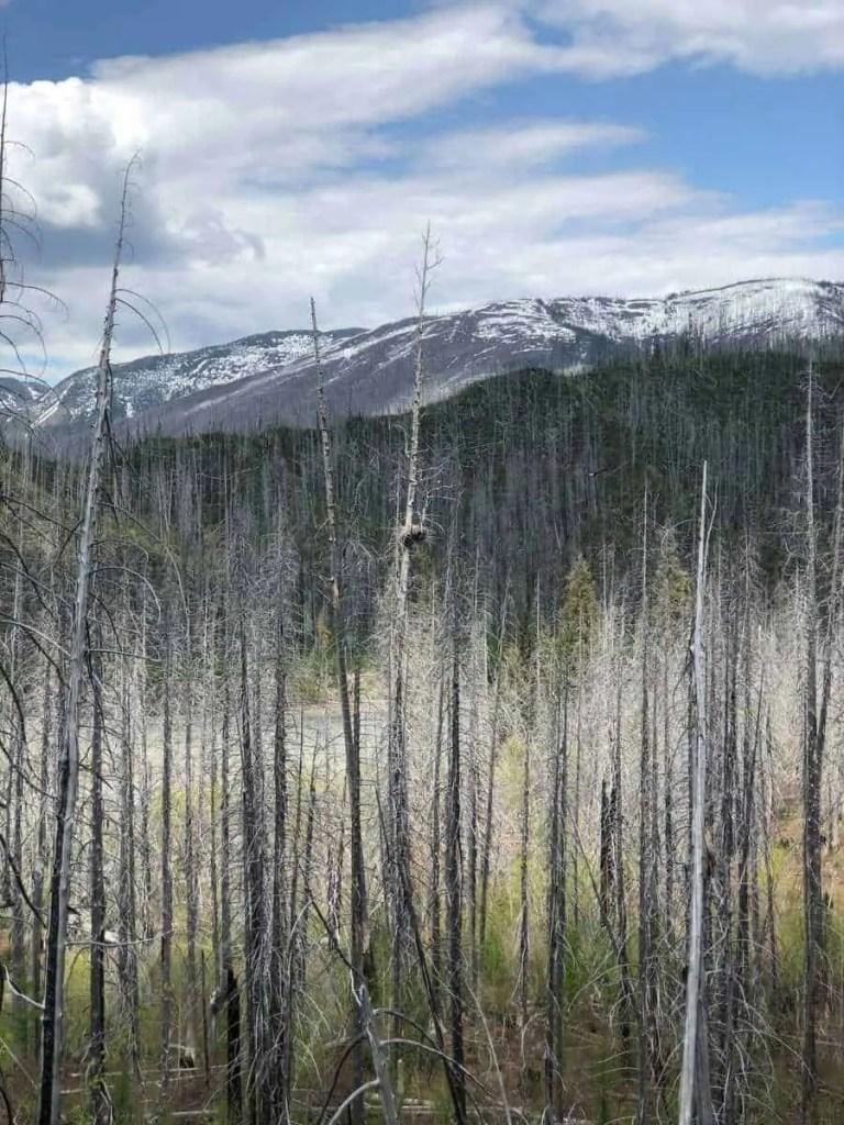 spring in glacier national park, glacier national park in spring, glacier national park in the spring, best time to visit glacier national park,