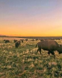 Zion National Park Wildlife