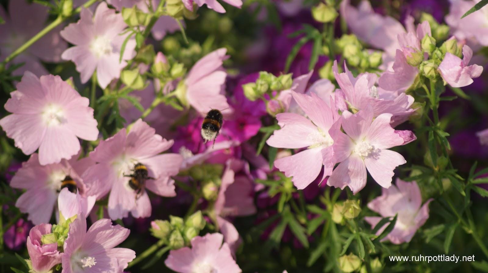 Gärtnern gegen das Insektensterben