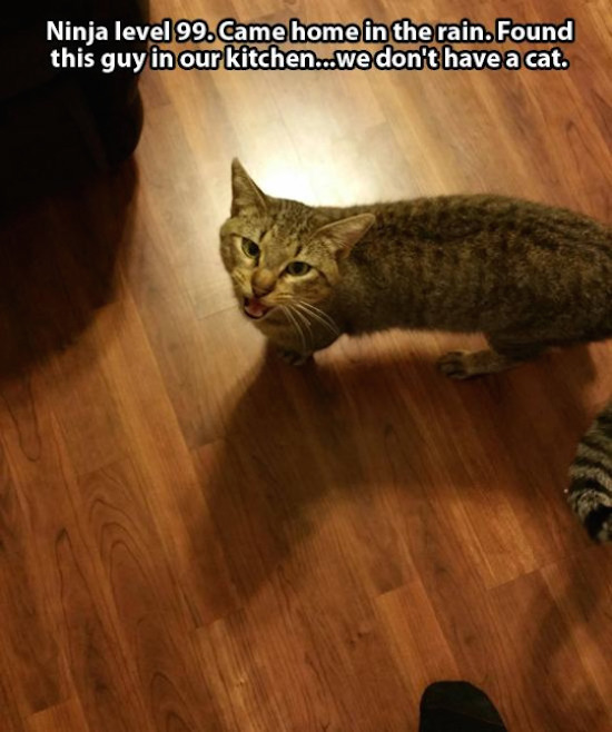 The Not My Cat Epidemic Is Both Cute And Creepy At The