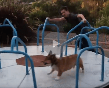 I Wish I Loved Anything As Much As This Corgi Loves This
