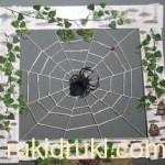 Пано паук на паутинке