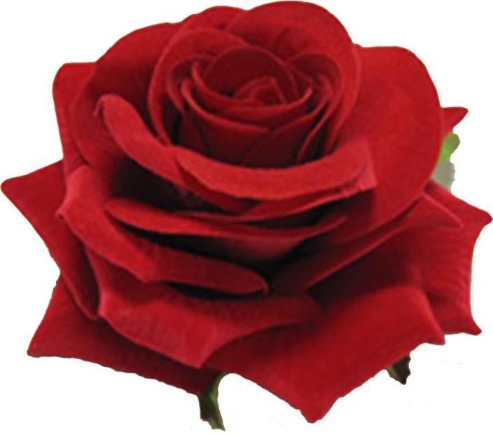 photos of red rose