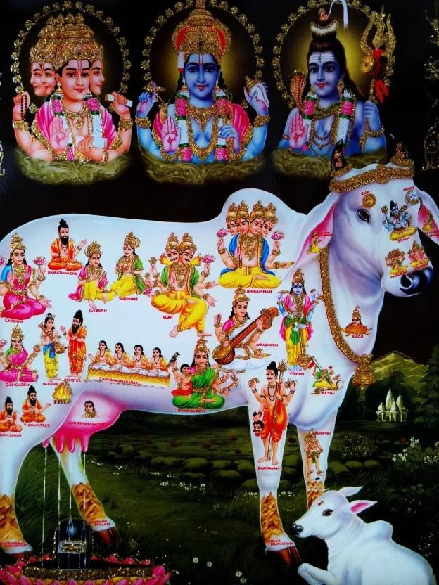 Hd Girl Highlights Wallpaper Poster Of Kamadhenu In White Along With Vishnu And Shiva