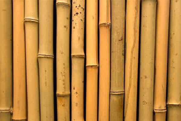 Mengenal Jenis Bambu untuk Konstruksi Bangunan  RumahLiacom