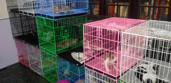 Selamat Datang di Rumah Steril! Rumah Steril Kucing dan Anjing Anda