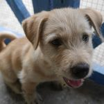 adopsi anjing