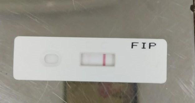Cerita FIP di Rumah Steril