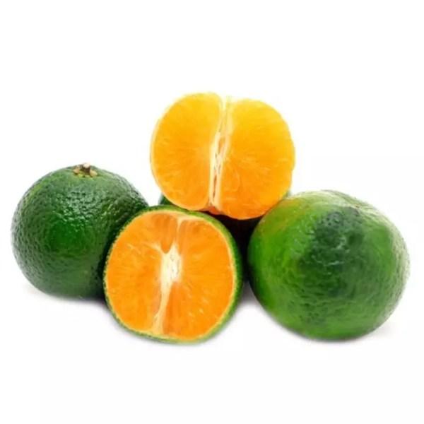 jual bibit jeruk santang