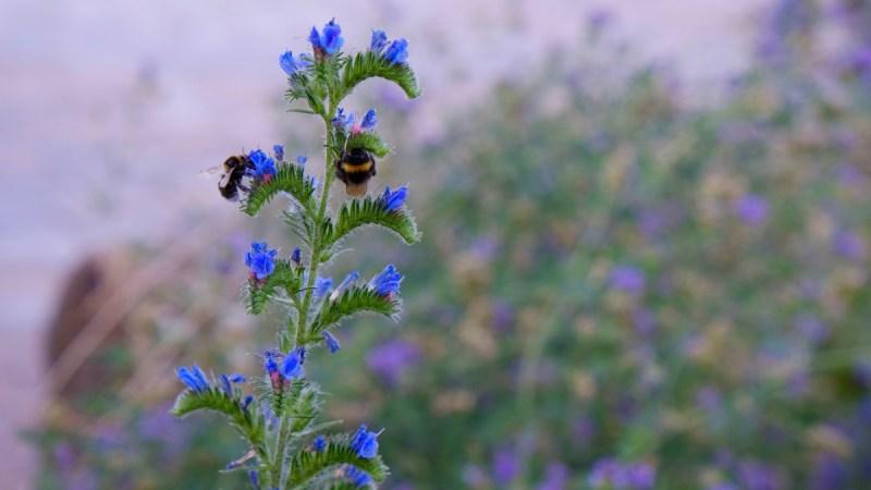 Blühendes Leben blau