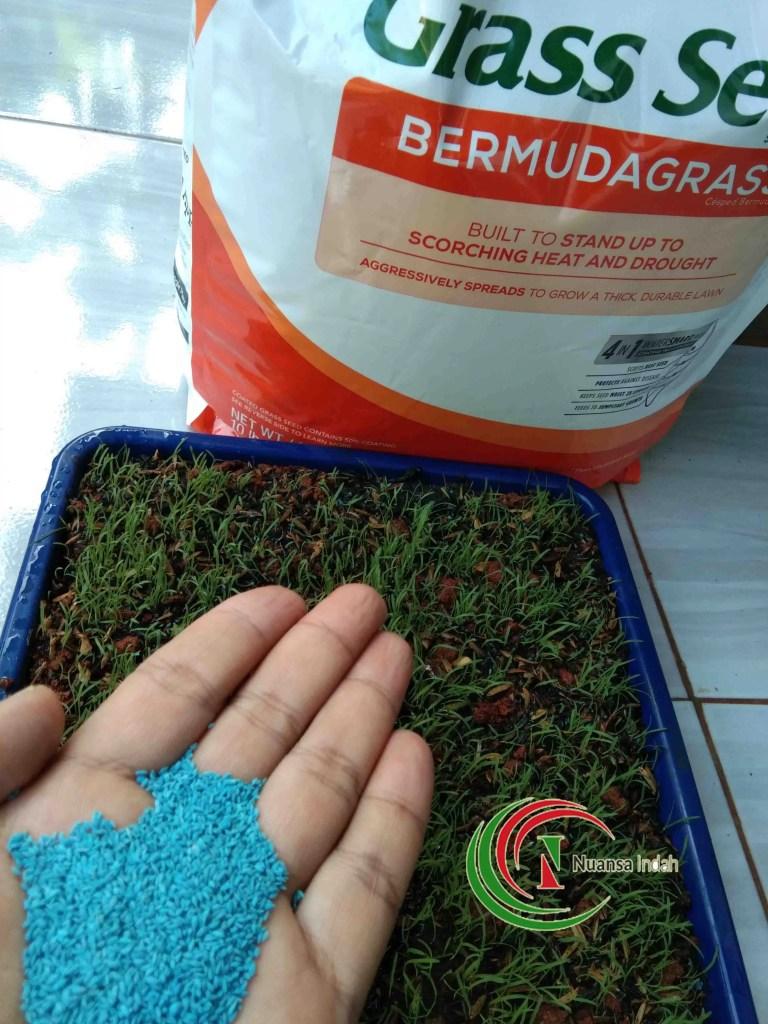 Jual Bibit Rumput Di Bogor