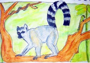 Ring Tailed Lemur Project