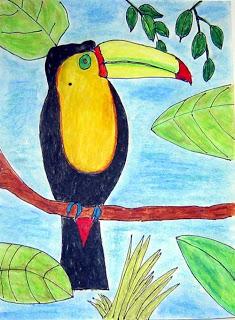 Toucan Drawing