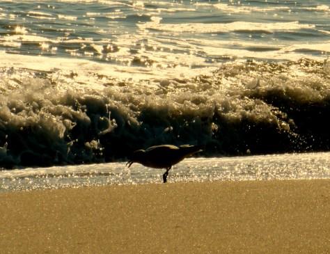 A lone seagull soaks up the sun and surf on Sea Bright Beach. Photo/Elaine Van Develde