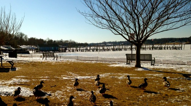 Duckin' Down by the River in Rumson