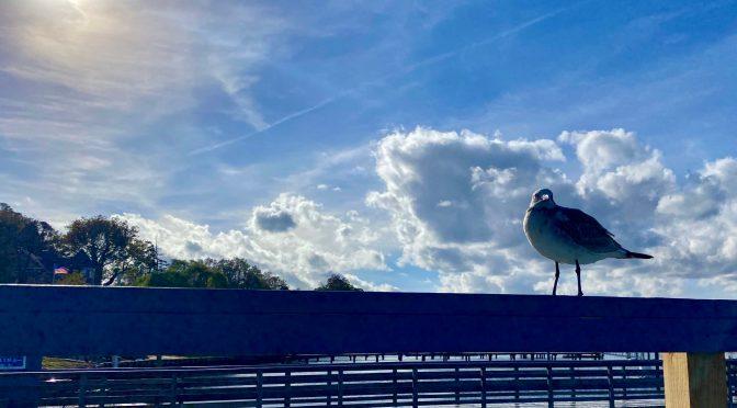 Focus: Rumson Gull Friends' River Heaven