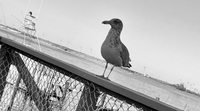 Nature Call Focus: Gull's Eye View