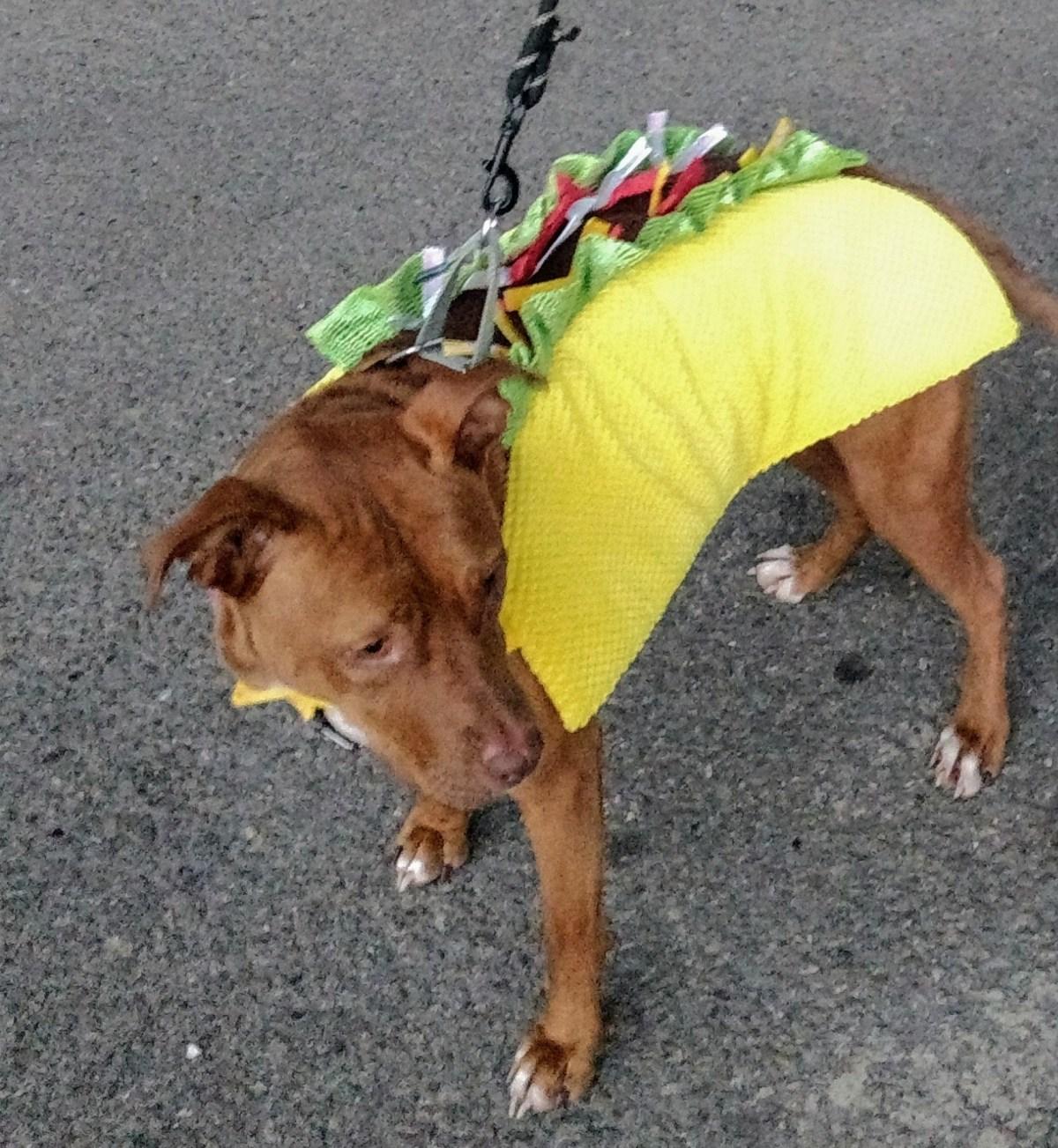 Taco Dog