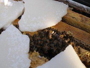 winter bee-candy