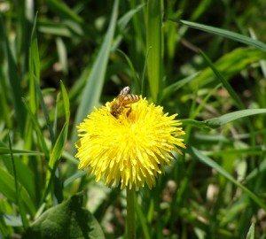 honeybees get to work at runamuk