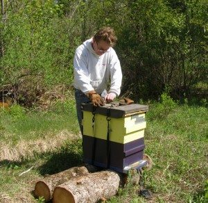 unstrapping the hive