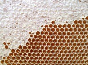 capped & uncapped honey