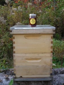 fall honey on a beehive