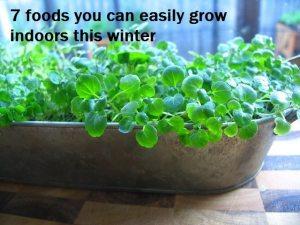micro-greens at home