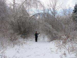 maine ice storm 2013