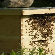 how to set up your 1st beehive