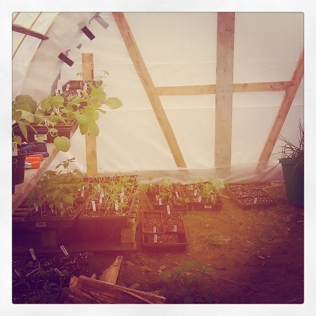 working in the hoop-house
