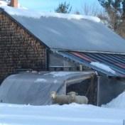 winter preparation on the farm