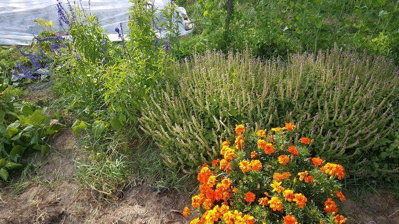 fall herbs n flowers