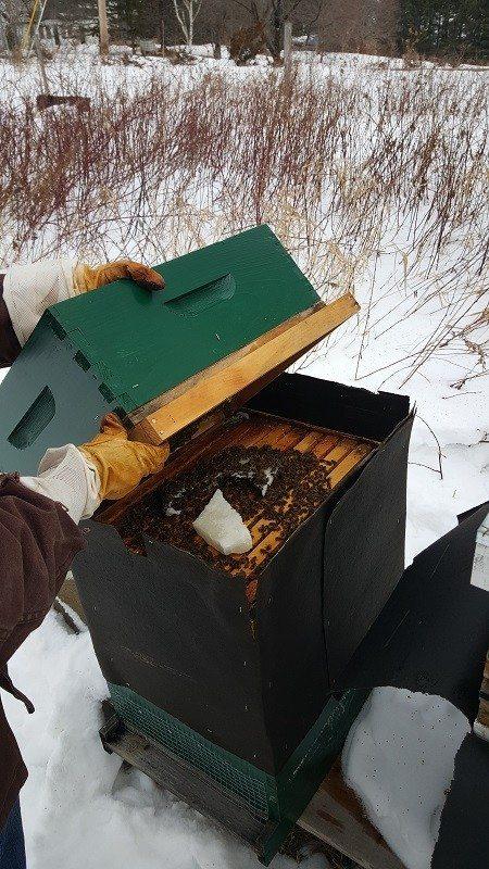 January Hive Checks4
