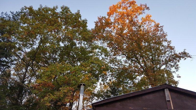 acorns-on-a-tin-roof