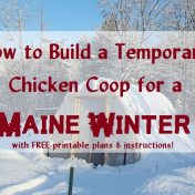 temporary-chicken-coop-for-winter