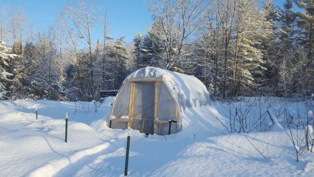 hoop-house-in-snow