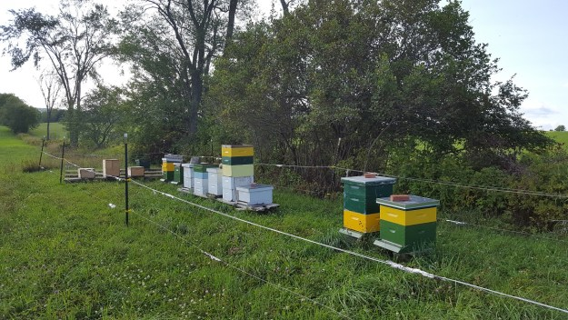 foundationless langstroth hives