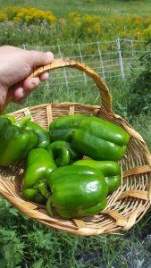 peppers-at-runamuk