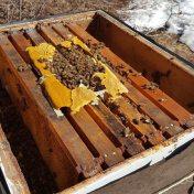 pollen-patties-for-beehives
