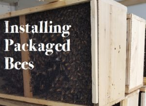 installing packaged bees