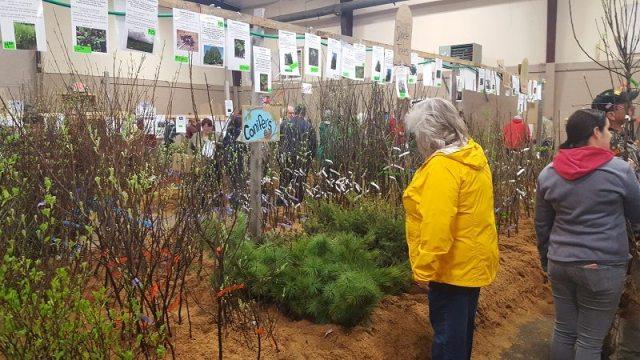 trees at fedco tree sale