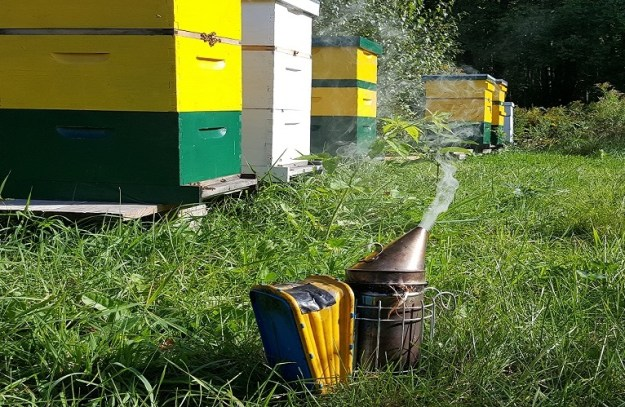beehives on benches with smoker