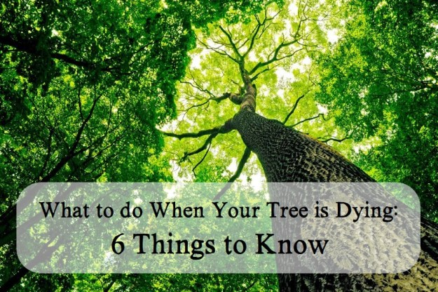 what to do when your tree is dying