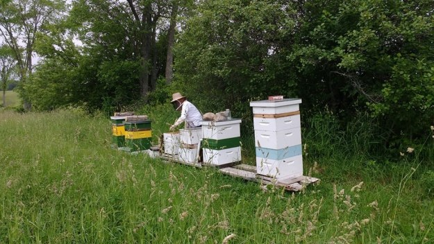 runamuk apiaries