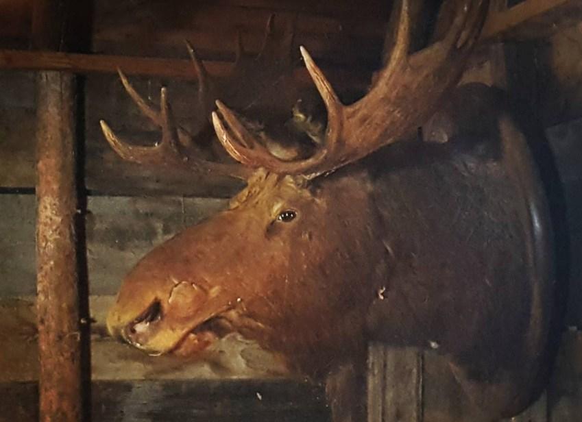 moose sentry